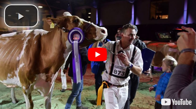 Swiss Expo 2018: Red-Holstein